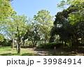 公園 新緑 春の写真 39984914