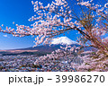 富士山 桜 春の写真 39986270