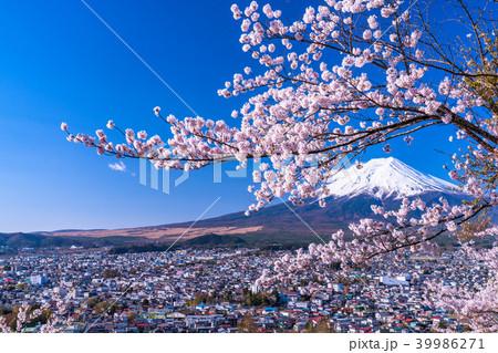《山梨県》富士山と満開の桜 39986271
