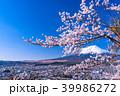富士山 桜 春の写真 39986272