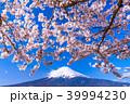 富士山 桜 春の写真 39994230