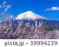富士山 桜 春の写真 39994239