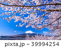 富士山 桜 春の写真 39994254