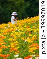 ポピー アイスランドポピー 花畑の写真 39997019