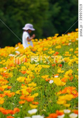アイスランドポピーの花畑と子供 39997019