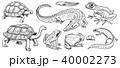 動物 ベクタ ベクターのイラスト 40002273