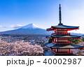 富士山 新倉山浅間公園 桜の写真 40002987