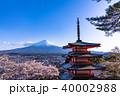 富士山 新倉山浅間公園 桜の写真 40002988