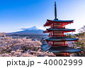 富士山 新倉山浅間公園 桜の写真 40002999