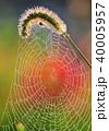 蜘蛛の巣 朝露 水滴の写真 40005957