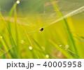 蜘蛛の巣 蜘蛛 巣の写真 40005958