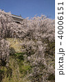 上田城 春 桜の写真 40006151