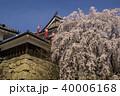 上田城 春 桜の写真 40006168