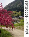 信州 長野県上田市武石 余里の一里の花桃 40006198
