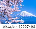 富士山 桜 満開の写真 40007408