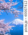 富士山 桜 満開の写真 40007412