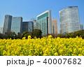 菜の花 菜の花畑 春の写真 40007682