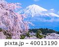 富士山 桜 満開の写真 40013190