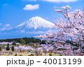 富士山 桜 満開の写真 40013199
