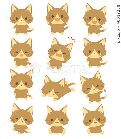 猫 40013258