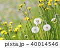 春の野の花 40014546