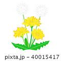たんぽぽ 蒲公英 花のイラスト 40015417