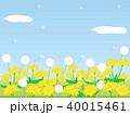 たんぽぽ4 花 40015461