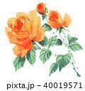 花 薔薇 水彩のイラスト 40019571