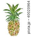 パイナップル 果物 パインのイラスト 40020964