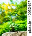 苔玉 苔 盆栽の写真 40032497