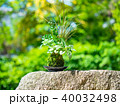 苔玉 苔 盆栽の写真 40032498