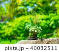 苔玉 苔 盆栽の写真 40032511