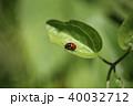 クロボシツツハムシ 昆虫 ハムシ科の写真 40032712