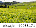 茶園 茶畑 新緑の写真 40033171
