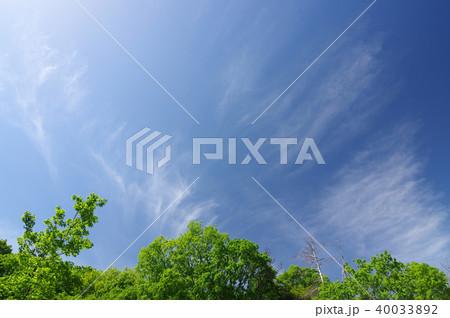 新緑と青空(背景素材) 40033892