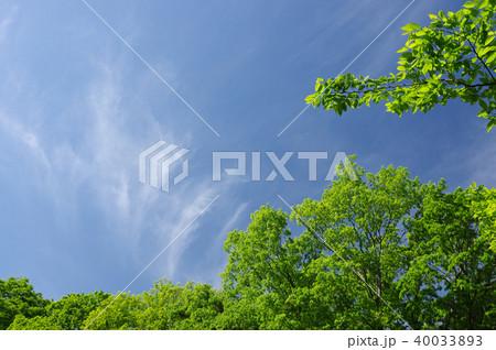 新緑と青空(背景素材) 40033893