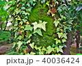 蔦と苔 40036424