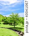 新緑 公園 青空の写真 40041067