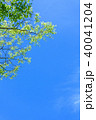 新緑 青空 春の写真 40041204