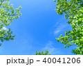 新緑 青空 春の写真 40041206