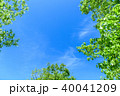 新緑 青空 春の写真 40041209