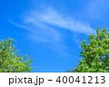 新緑 青空 春の写真 40041213