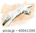 猫 子猫 水彩のイラスト 40041390