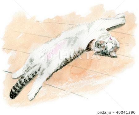 水彩で描いたお腹を出して眠る子猫 40041390