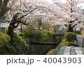 春 桜 哲学の道の写真 40043903
