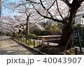 春 桜 哲学の道の写真 40043907