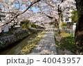 春 桜 哲学の道の写真 40043957