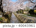 春 桜 哲学の道の写真 40043961