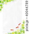 金魚 新緑 楓のイラスト 40044789