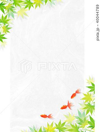 金魚 和紙_白 40044789